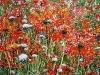 01_Rote Blumen | 2006 | 100x140 cm